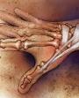 Hand wrist anatomy